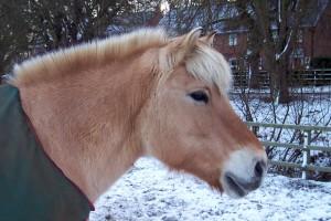 bonny-snow-head